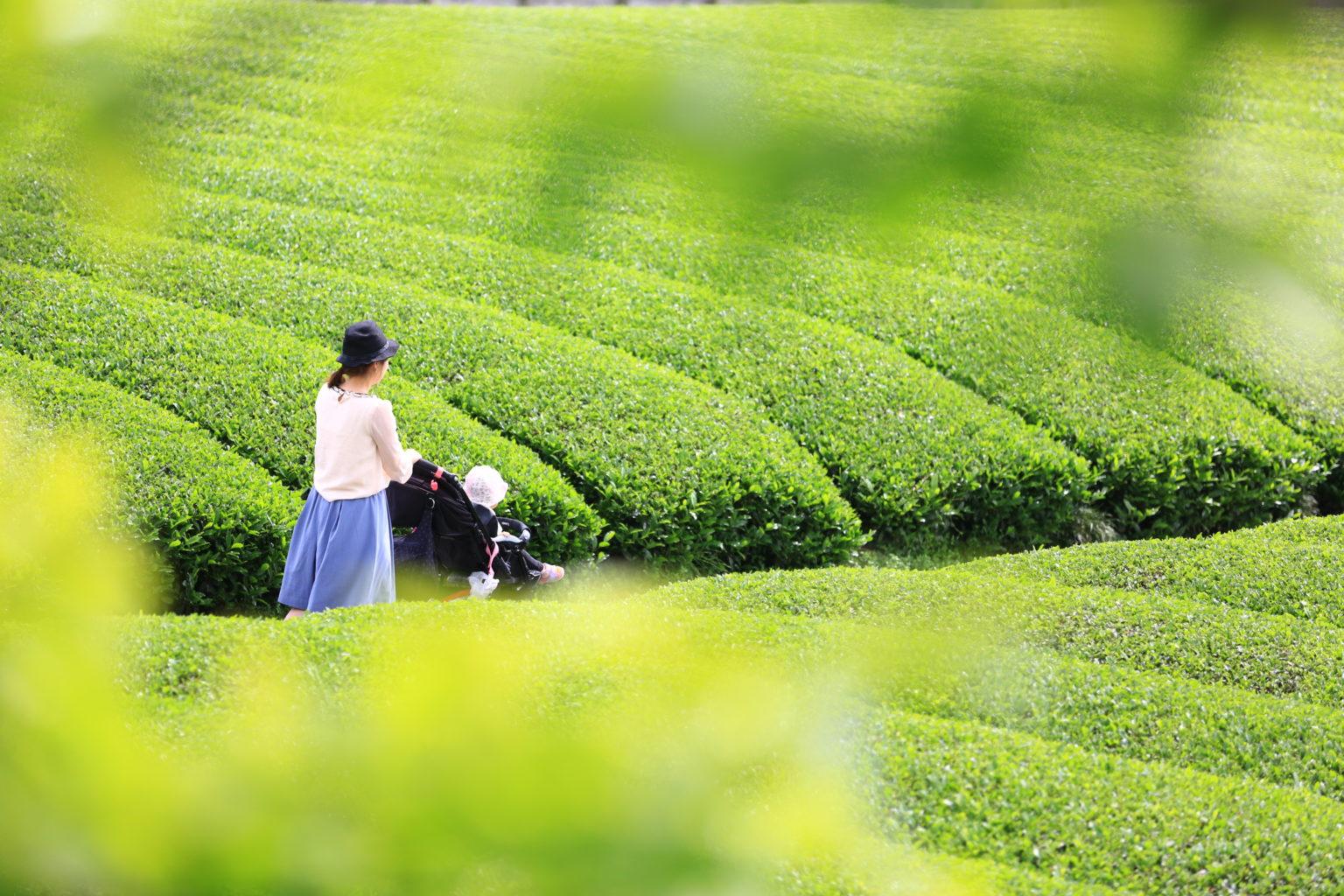 茶畑ベビーカー
